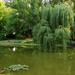 Tatabánya Népház park