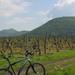 Egri szőlők