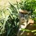 Veszprémi állatkert Huszármajom 2