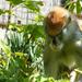 Veszprémi állatkert Huszármajom