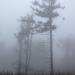 IMG 0106 Fák a hegytetőre húzódott ködben