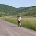 396 Bódvarákó felé, háttérben a Nyerges-hegy