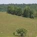420 Legelő (árnyékban tehenekkel) Tornabarakony határában