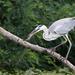 Album - Tisza-tavi madarak