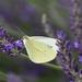 Pillangó