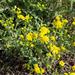 Virág a Rákospalota/Újpest vasút állomáson, SzG3