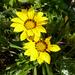 Otthoni virágaim, augusztus, SzG3
