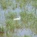 052-Nagyszéksós-tó