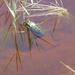 057-Nagyszéksós-tó