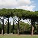 Felhők és fák (Via Appia)