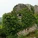 Zöldellő romok