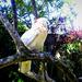 Kakadu portré