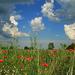 Pipacsok és felhők