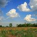 Felhőpamacsok