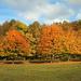 Őszi erdő haranglábbal