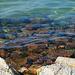 Kristálytiszta Balaton