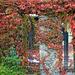 Őszi függöny