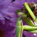 méhész (videóval)