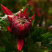 őszi virág