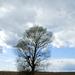 fa felhővel