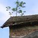 tetőfa