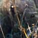Album - Ködcseppes ősz