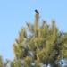 a madarak is keresik a kaját
