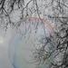 buborék az ágak között