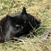 cica ül a fűben