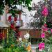 lakótelepi virágoskert