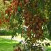 árnyat adó fák őszbe hajolva