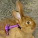 Kellemes húsvéti ünnepeket kívánok minden kedves Indásnak