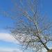 vigyázat, dől a fa