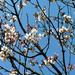 na végre, hogy tavasz van