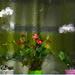 virágok ablakban