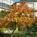 Füvészkerti ősz