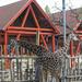 sziámi zsiráfok