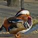 Mandarin másik profilja