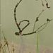 vízivilág