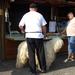 fesztiválozó komondor