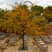 ősz a Gödörben