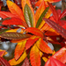 borbolya ág ezer színe