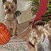 Kutyák és labdák:):):)