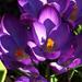 Lilák