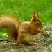 másik mókus!:):)