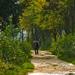 magányos séta a borongós időben