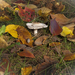 őszi színskála