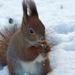 mókus a hóban