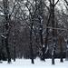 havas szigeti fák