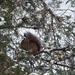 ... felmászott a fára